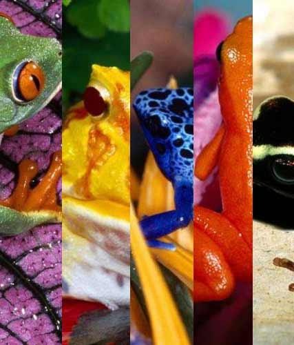 31_frogs_105844.jpg